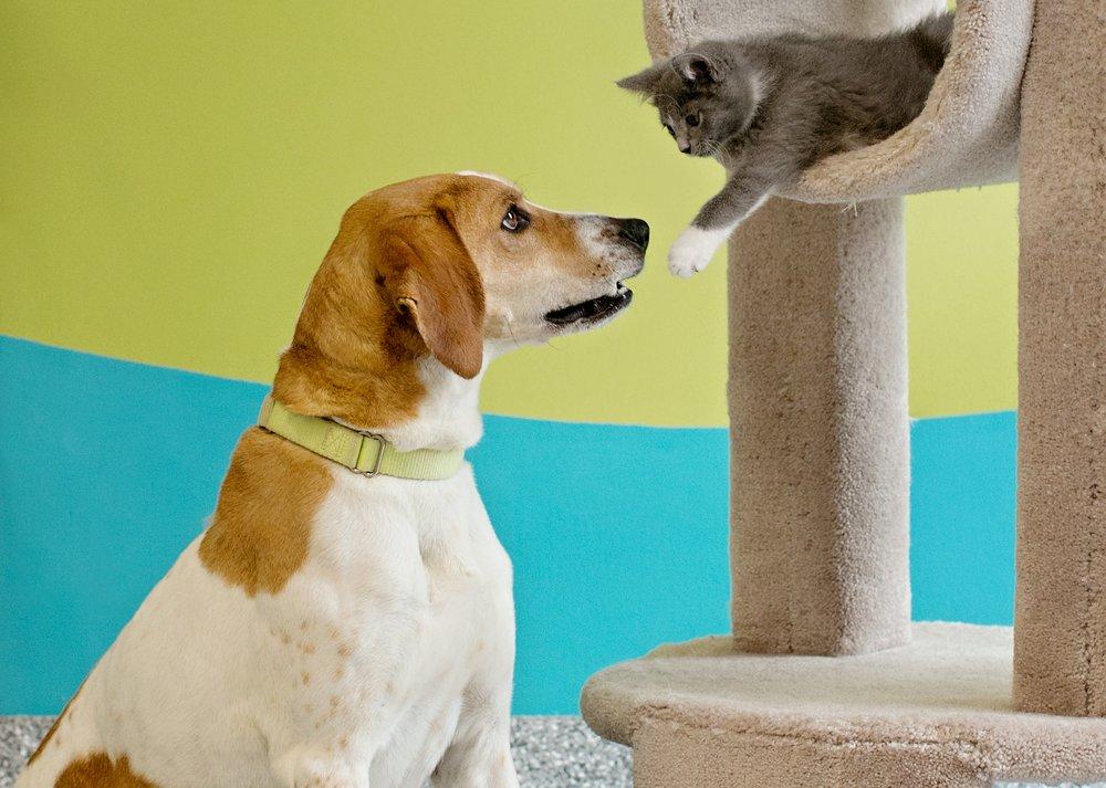 League For Animal Welfare: 4193 Taylor Rd, Batavia, OH