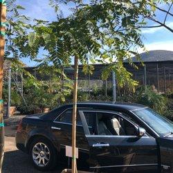 Photo Of Evergreen Nursery El Cajon Ca United States Grows Fast
