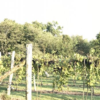 Park City Ky Wineries