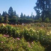photo of international rose test garden portland or united states amazing - Portland Rose Garden