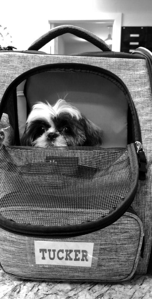 Classi Diva Pet Spa: 11500 Manchaca Rd, Austin, TX