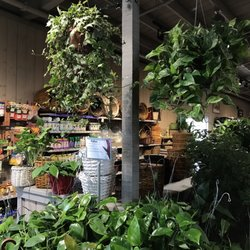 Photo Of Armstrong Garden Centers Dublin Ca United States Pothos Plants