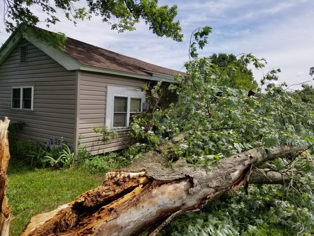 Colter's Tree Service: 8342 Broadway St, New Bloomfield, MO