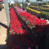 Photo Of Houston Garden Centers   League City, TX, United States
