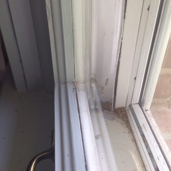 window cleaning nashville cleaning services photo of all seasons window cleaning nashville tn united states bugs left washing south nashville