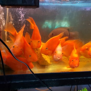 Aqua Star Pet Shop - 38 Photos - Aquariums - 44 Henry St