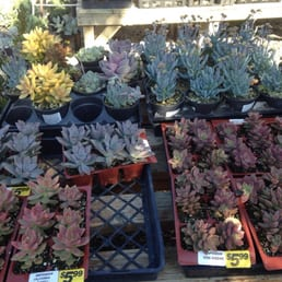 Photo Of Glendora Gardens Nursery And Tree Farm   Glendora, CA, United  States