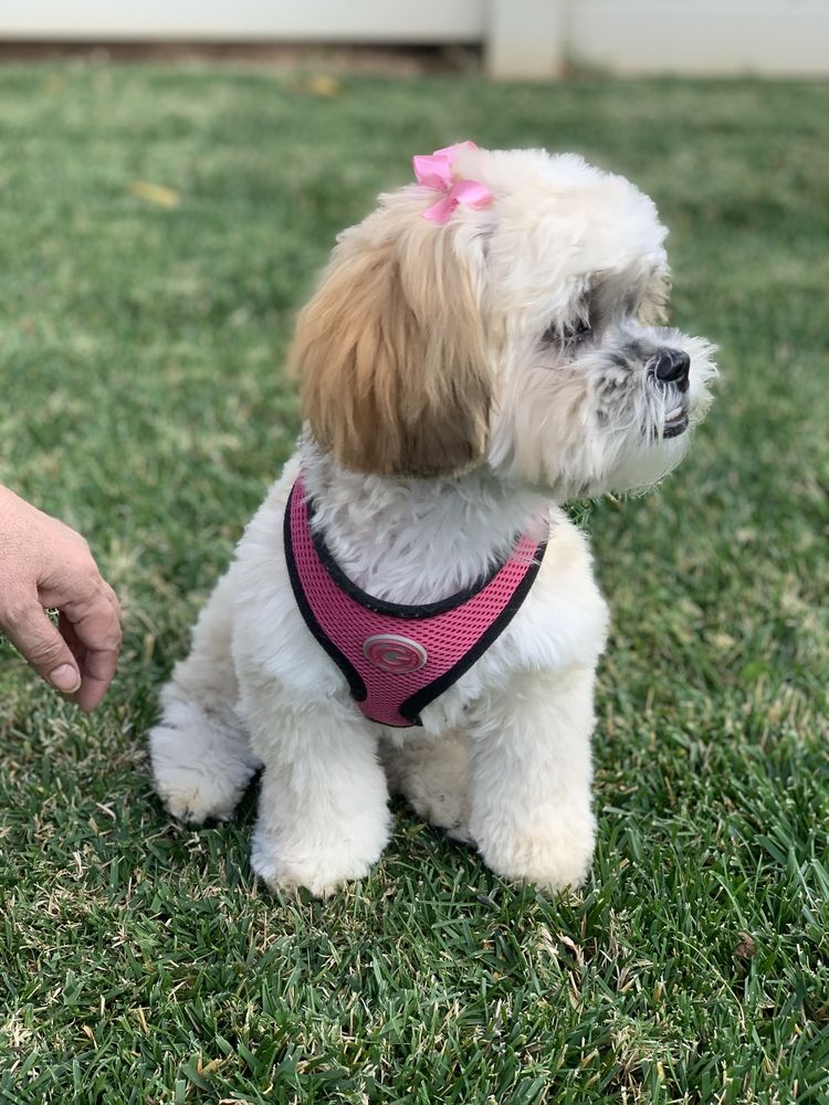 Pets Choice Grooming & Supply: 1270 E Washington St, Colton, CA