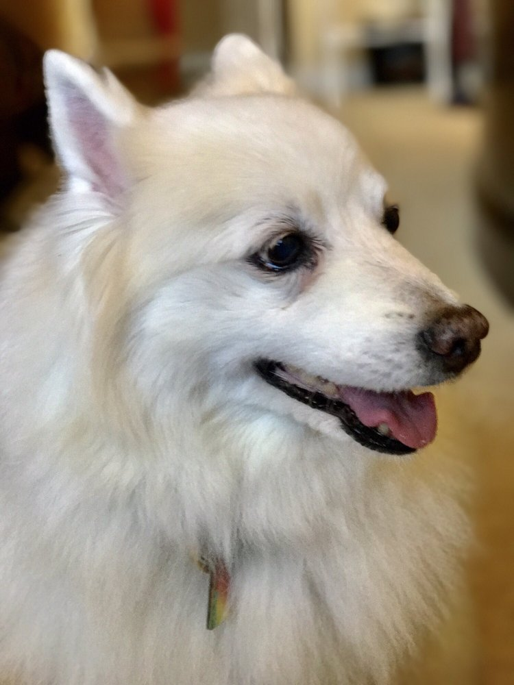 5287c5a5c79 Yelp Reviews for Gentle Care Animal Hospital - 15 Photos & 57 ...