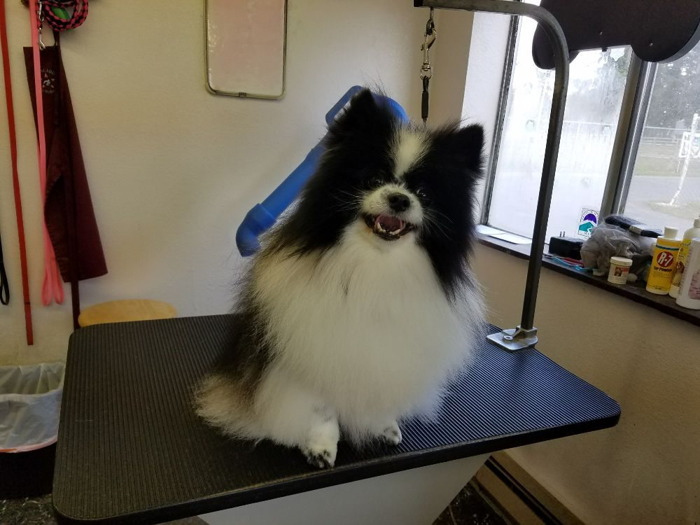 Four Paws Pet Grooming: 11321 Bald Hill Rd SE, Yelm, WA