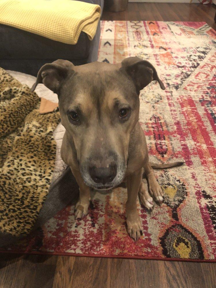 The Canine Center for Training & Behavior: 11400 Hwy 290th W, Austin, TX