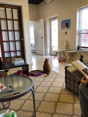 Catnip Cat Cafe - 140 Photos & 28 Reviews - Pet Adoption