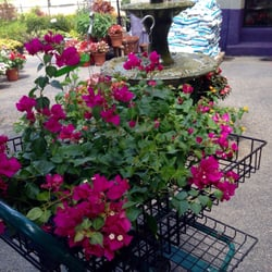 The Plant Market Nurseries Gardening 7124 Campbell Rd North Dallas Tx Phone Number Yelp