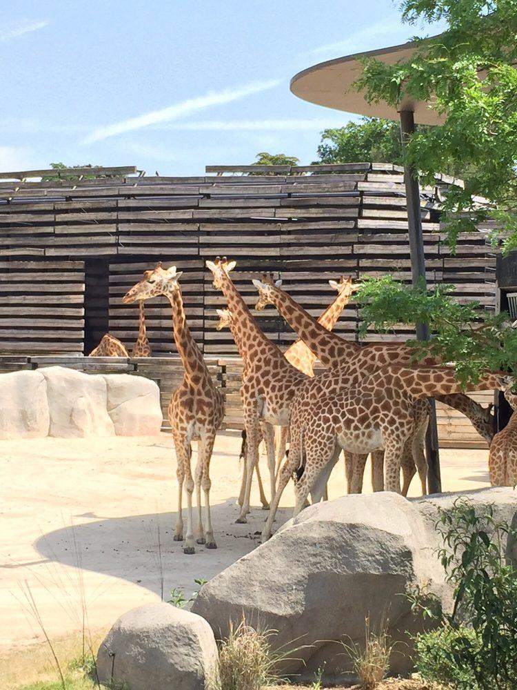 Zoological Park of Paris