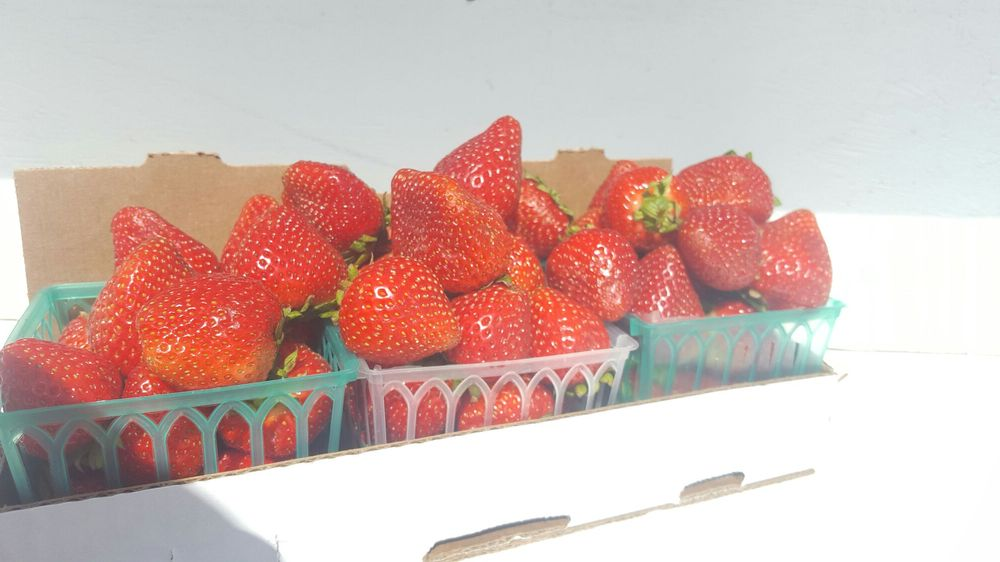 Thacker Berry Farms: 115 North Harbor, La Habra, CA