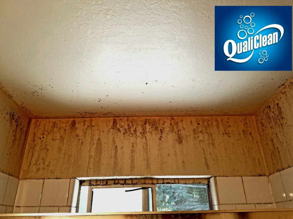Photo Of Qualiclean San Jose Ca United States All Molds Can Potentially