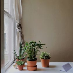 Photo Of Clement Nursery San Francisco Ca United States Plants From