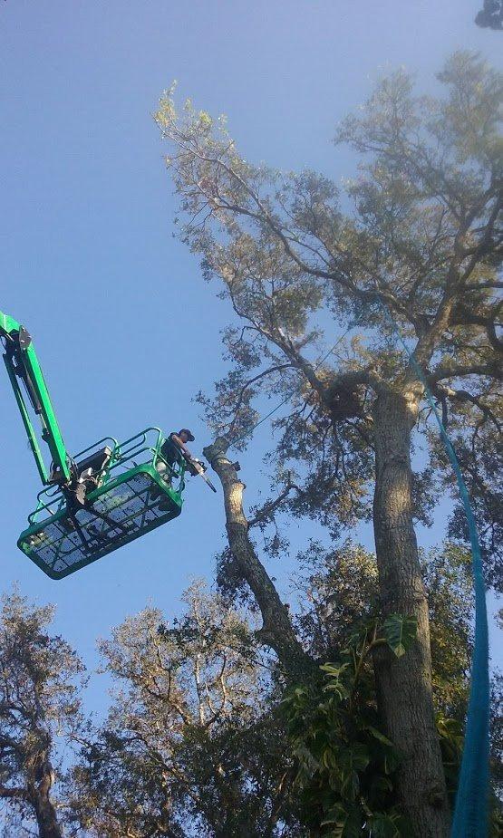 2 Men and a Tree: Crescent City, FL