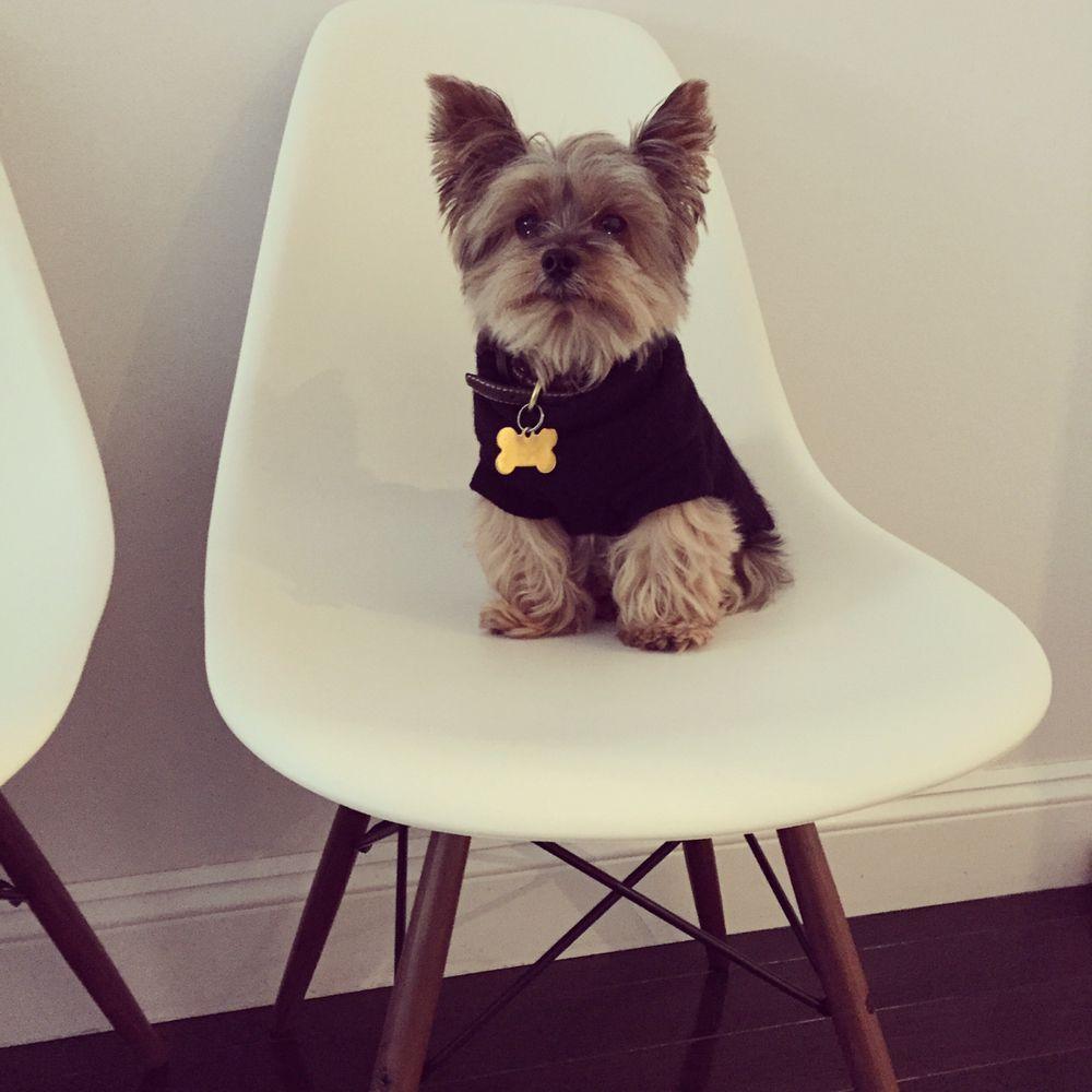 Jessie's Pet Sitting: Bayside, NY