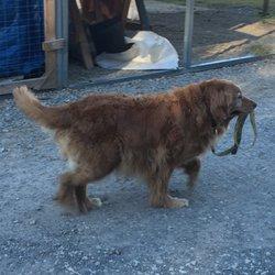 Dog Day Flea Market Tn