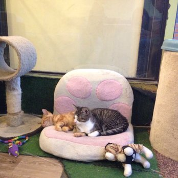 Tot Cat Cafe Review