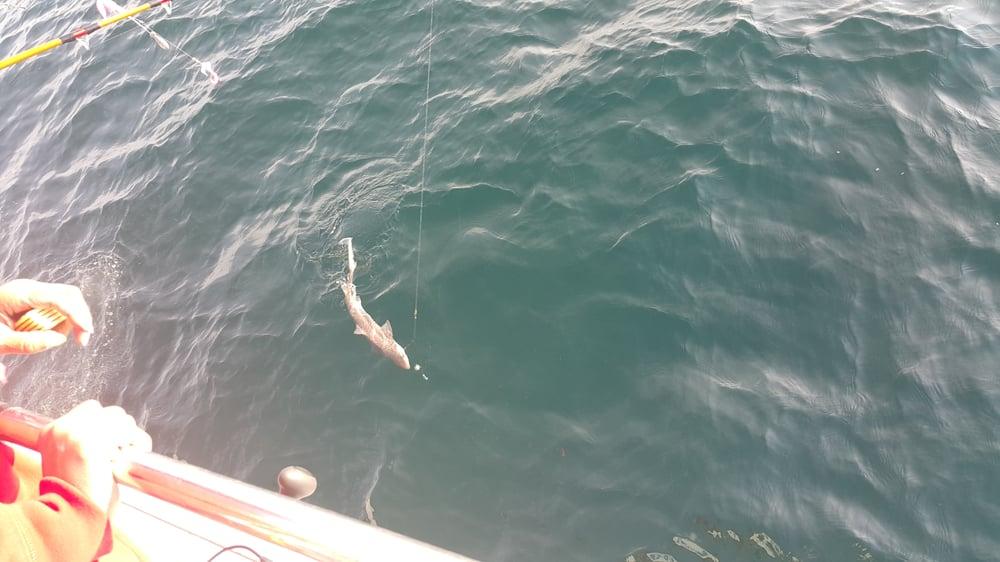 The Angler Headboat