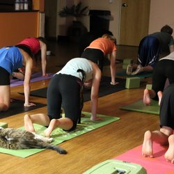 The Best 10 Yoga Near Old West Side Ann Arbor Mi Last Updated August 2019 Yelp