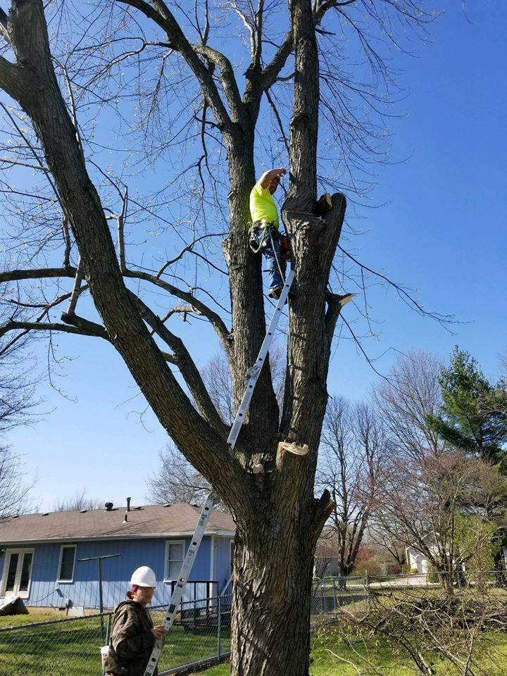 Owner Charles Scaling A Tree Yelp