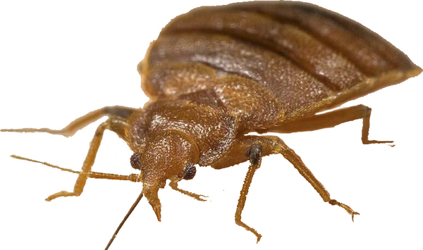 ken's bed bug service - pest control - 4708 nw 46th dr, oklahoma