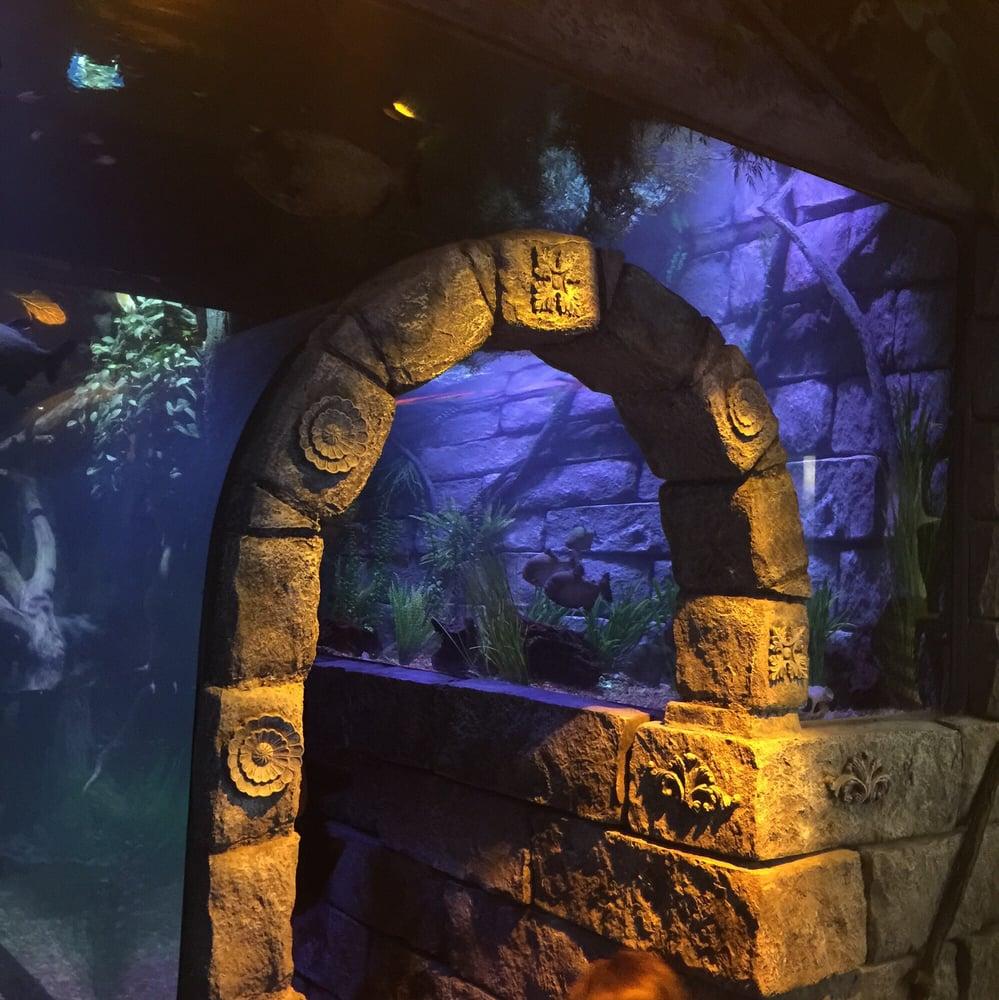 Sea Life Aquarium 106 Photos 78 Reviews Grapevine Mills Mall Grapevine Tx Phone