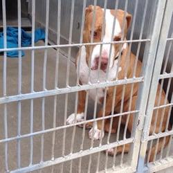 Ventura County Animal Services - Microchip Max | Facebook |Ventura County Animal Services