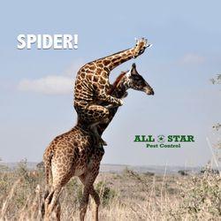 All Star Pest Control Pest Control 2829 S 148th Ave Cir Omaha