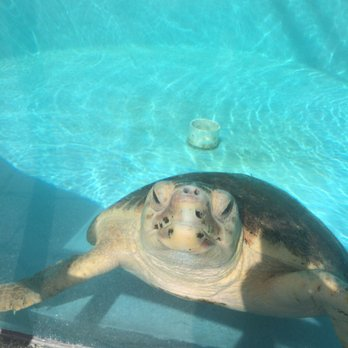 Photo Of Loggerhead Marinelife Center Juno Beach Fl United States Cute