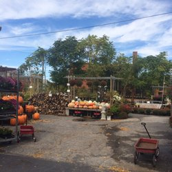 Photo Of Lakewood Garden Center Oh United States Great Pumpkin Selection