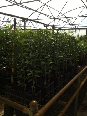 Photo Of Farmer S Citrus Nursery Lakeland Fl United States This Is Some