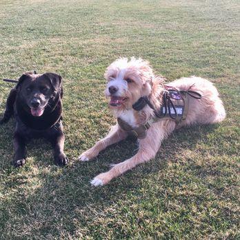 Zenergy Dog Training