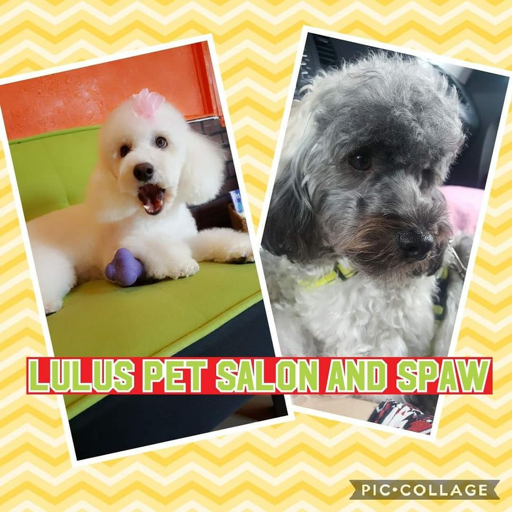 Lulu's Pet Salon And Spaw: 1620 S Orlando Ave, Maitland, FL