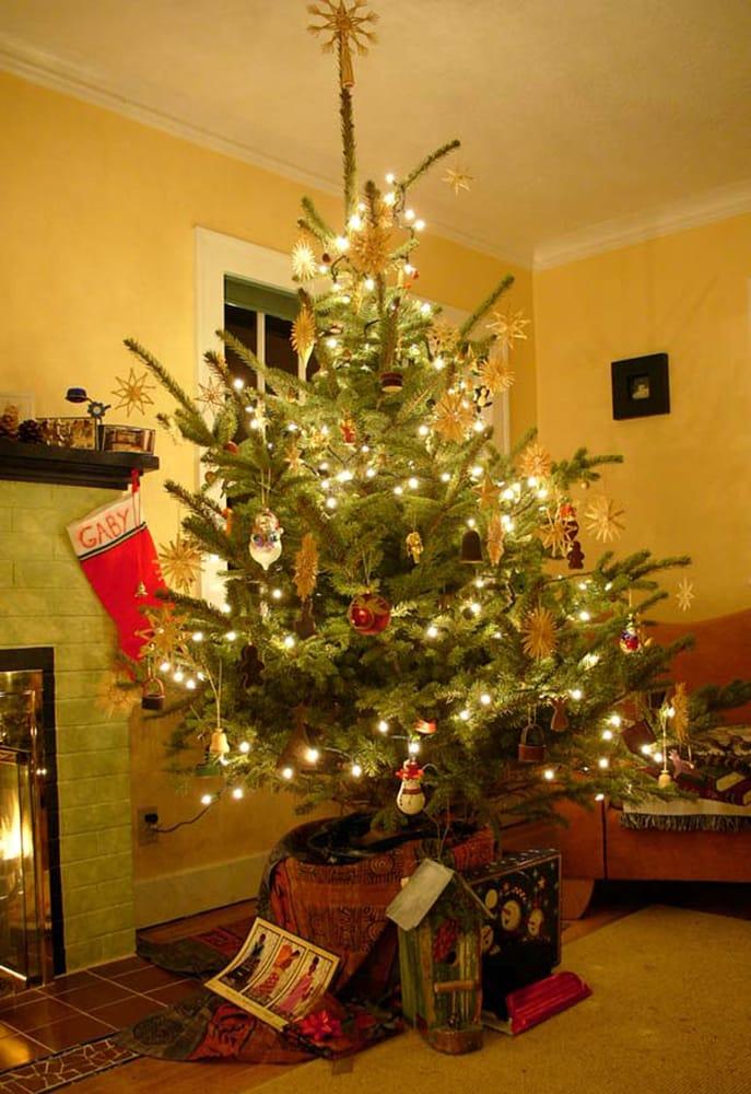 The Original Potted Christmas Tree Company Christmas Trees