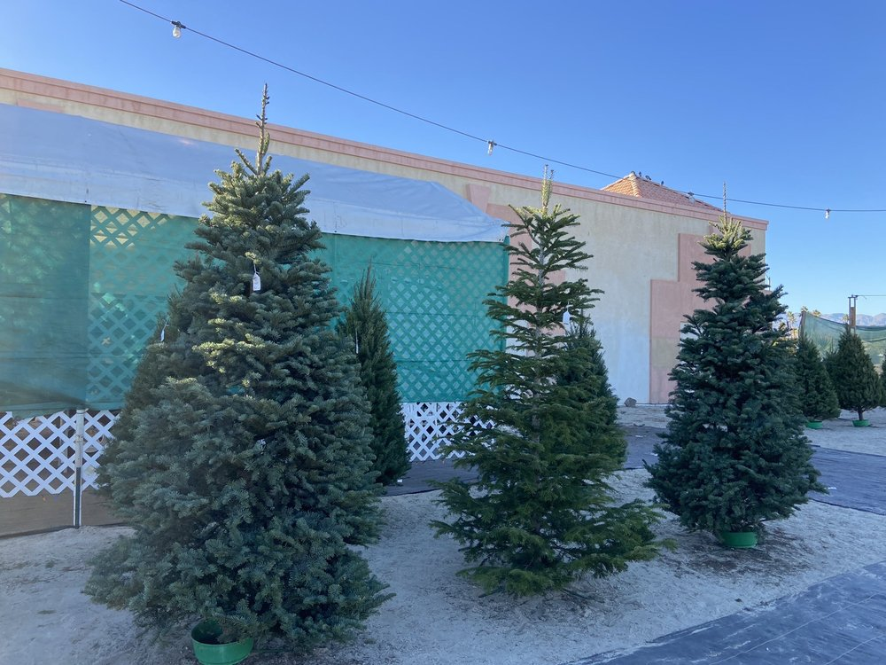 Aerni family Christmas trees: 68665 Ramon Rd, Cathedral City, CA