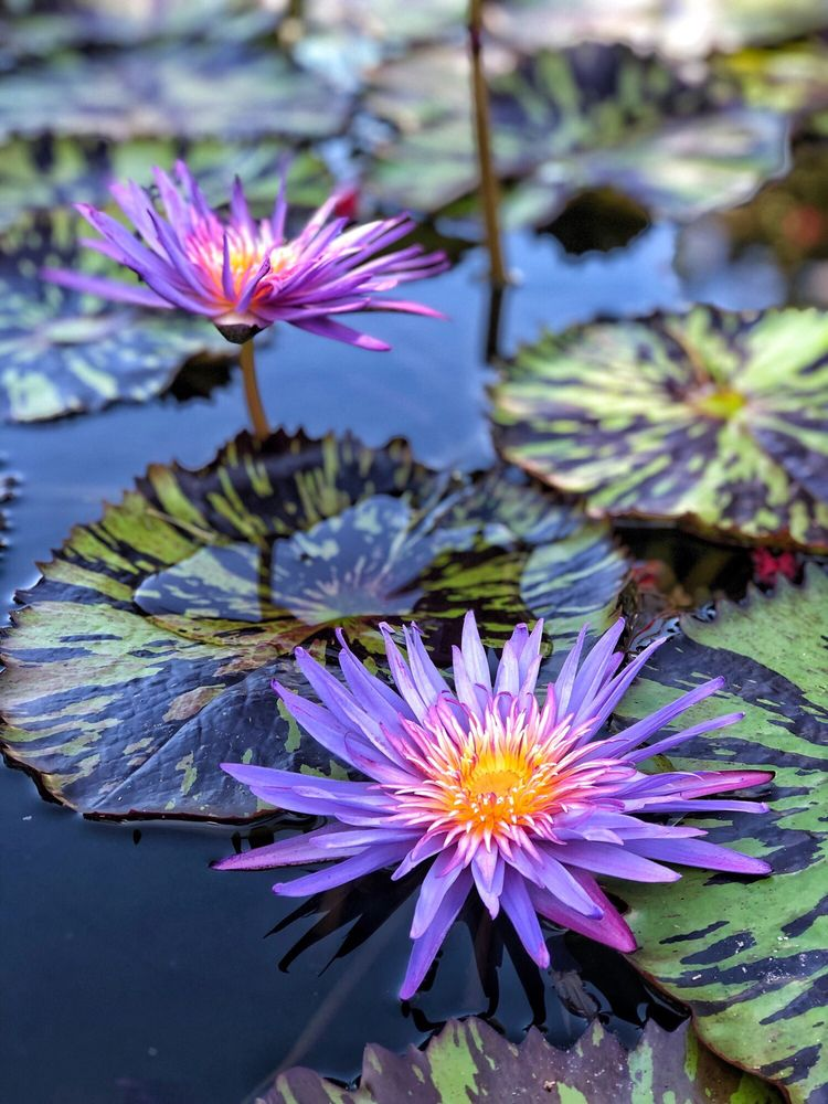 Zilker Botanical Gardens