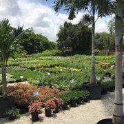 Photo Of Sunkiss Nursery Pompano Beach Fl United States