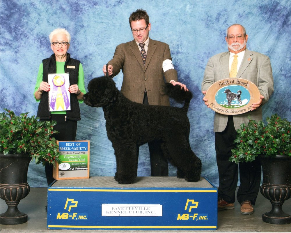 Success Portuguese Water Dogs: 21555 S 1st Rd, Beatrice, NE