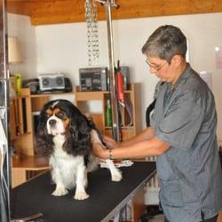 Salon de toilettage au paradis du chien pets rue de la for Salon toilettage chien