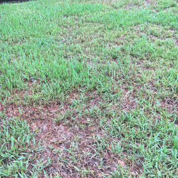 Photo Of TruGreen Lawn Care   Fort Lauderdale, FL, United States. This Is