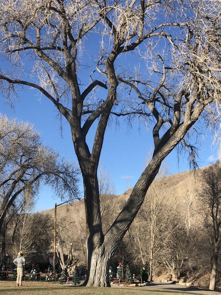 Canopy Tree Service: Larkspur, CO