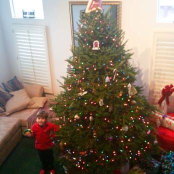 photo of green valley christmas trees mountain view ca united states 9 - 9 Foot Christmas Tree