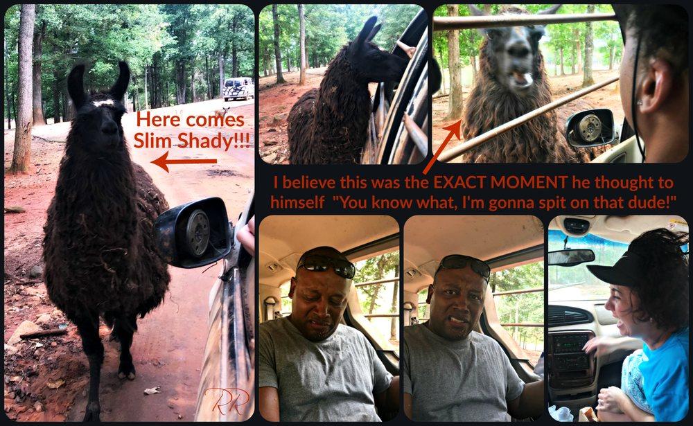 Wild Animal Safari: 1300 Oak Grove Rd, Pine Mountain, GA