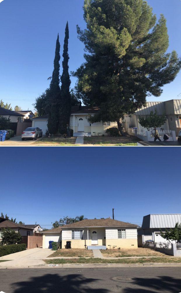 Inexpensive Tree Services