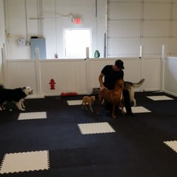 Every doggie has its daycare 34 photos 18 reviews for Dog boarding places near me