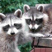 Photo Of A All Animal Control Kansas City Overland Park Ks